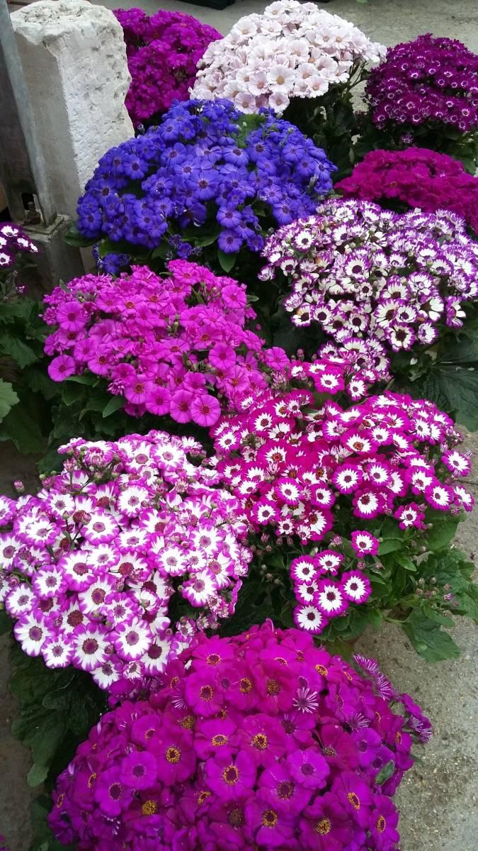 Fleuriste pour la fête des Rameaux proche d'Etretat - Jardinerie à Froberville : vente d ...