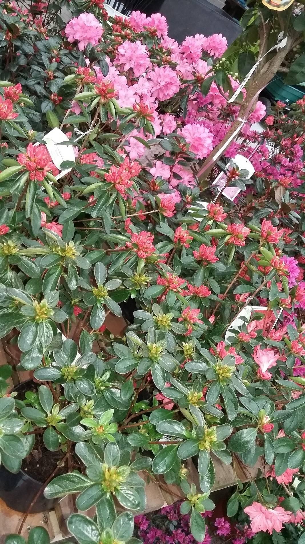 Fleuriste pour la f te des rameaux proche d 39 etretat for Fleuriste proche