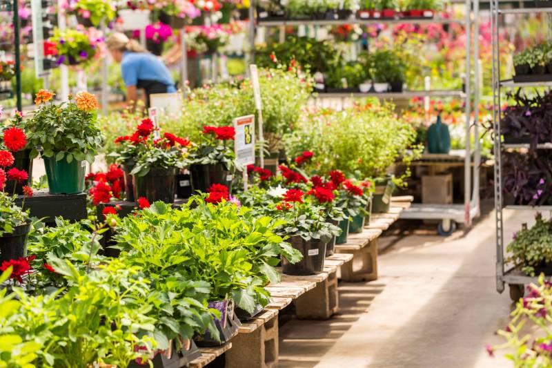 Fleuriste pour livraison de fleurs proche f camp for Fleuriste proche